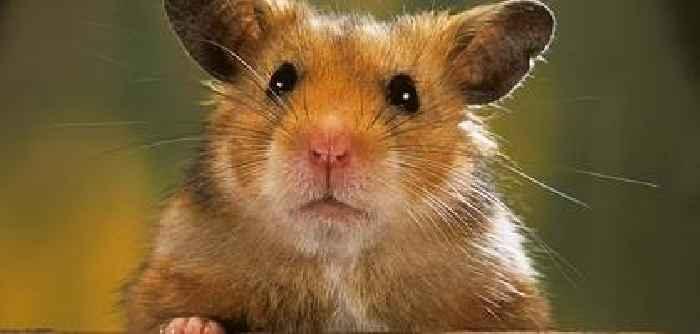 Hamster In Deutschland Ausverkauft