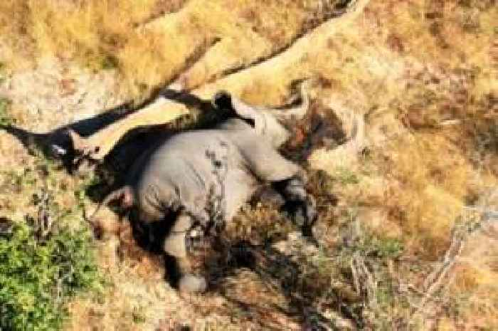 Elefanten Sterben Ursache