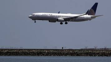 Tiere: Neues Hunde-Problem bei United Airlines
