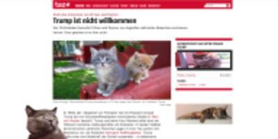 wie jede website zu cat content wird: fünf browser-erweiterungen, miau