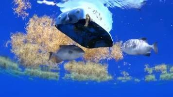 Video: Greenpeace fordert Vertrag zum Schutz der Hochseegewässer