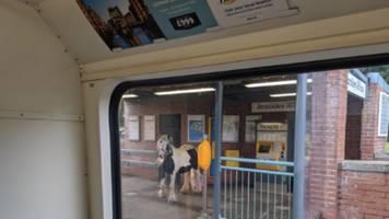 Skurriler Schnappschuss: Da steht ein Pferd auf dem – Bahnsteig! Brite sieht ein Pony, das auf den Zug zu warten scheint