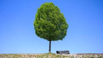 Tag der Deutschen Einheit: Aktion Einheitsbuddeln: Am 3. Oktober soll jeder Deutsche einen Baum pflanzen