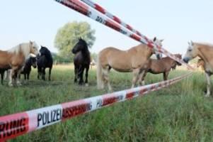 niedersachsen: wildwest in hannover: polizei fängt 40 pferde wieder ein