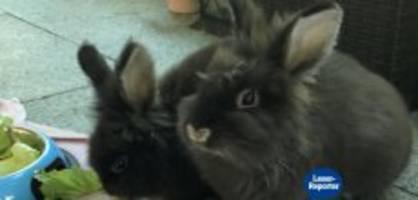tiere ausgesetzt: «wir konnten die knochen der kaninchen spüren»