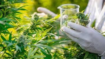 Polizei bittet um Hinweise : Illegaler Grünstreifen: Cannabis-Plantage auf dem Grafinger Marktplatz entdeckt