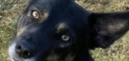 Nayla (4) vermisst: «Schauen Sie diesem Hund nicht in die Augen»