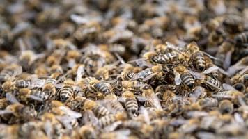 volksbegehren: kretschmann will mit bienen-freunden reden