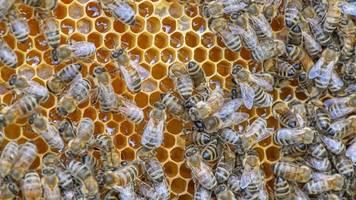 Wegen schlechten Wetters: Honigernte in Bayern bricht ein