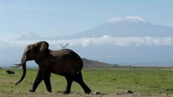 artenschutz: ein streit ums elfenbein droht