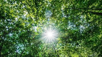 CDU will für Klimaschutz zusätzlichen Wald im Norden