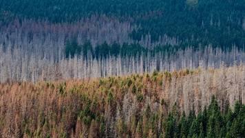 Waldschäden: Gewerkschaft fordert mehr Forstwirte