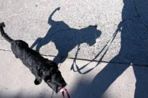 Hundehalter: Trotz Leinenzwang für Hunde: Kaum Bußgelder erhoben