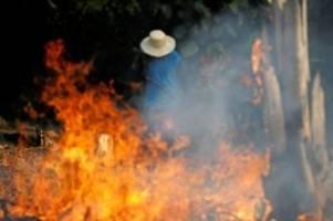 Waldbrände: Amazonas-Regenwald brennt: Eine Gefahr namens Mercosur