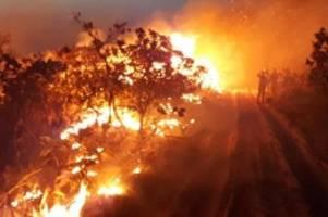 Waldbrände in Brasilien: Bolsonaro vermutet Umweltschützer hinter Amazonas-Bränden