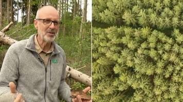 Förster und Bestseller-Autor  : Peter Wohlleben: Die Forstwirtschaft hat grüne Wüsten geschaffen