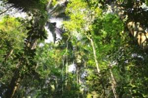 Klimaschutz: Amazonas: So wichtig ist der Regenwald fürs Welt-Klima