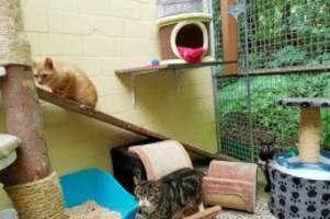 Grosshansdorf: Katze aus Messie-Haus bringt drei Junge zur Welt