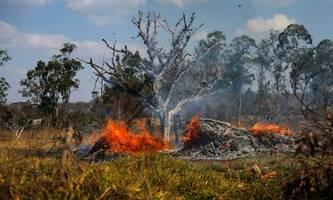 Brasiliens Präsident vermutet Umweltschützer hinter Waldbränden