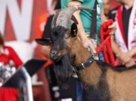 1. FC Köln: Auf geht's! Volksfest!