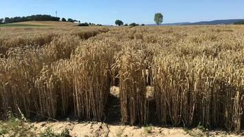 """klimawandel: """"pflanzen müssen heute viel mehr aushalten"""""""