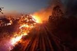 Große Ambition, kein Plan - In der Flammenhölle des Amazonas brennt gerade der Glaube an eine bessere Welt ab