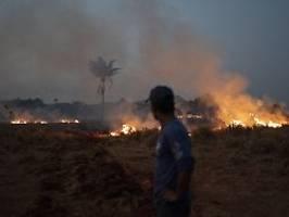 Unser Haus brennt: Merkel teilt Macrons Sorgen um Regenwald