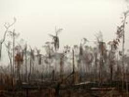 Bolsonaro ordnet Armee-Einsatz gegen Waldbrände am Amazonas an