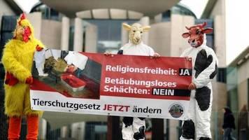 Gesetz gegen Schächten: Zentralrat der Juden sieht Religionsfreiheit unter Beschuss