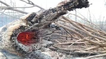 Feuer im Amazonas: Bolsonaro will Militär gegen Waldbrände einsetzen