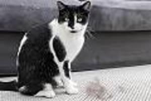 Haarfreies Heim - Katzenhaare entfernen: So werden Sie Tierhaare in der Wohnung ganz einfach los