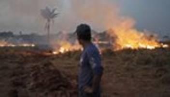 Brasilien: Brasilianische Armee startet Einsatz gegen Amazonas-Brände
