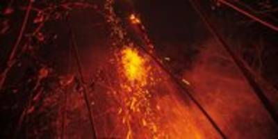Waldbrände in Amazonas-Region: Armee gegen Feuer