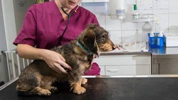 Hundekrankheit: Schon 21 tote Hunde: Gefährliche Krankheit in Norwegen gibt Rätsel auf