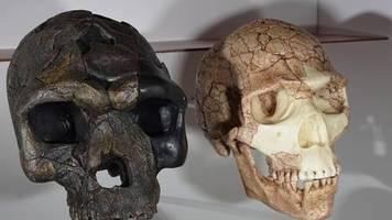 Jenaer Erklärung: Keine biologische Begründung: Zoologen lehnen Begriff Rasse ab