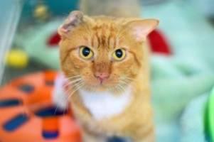 Tierschutz: Katzen aus Großhansdorfer Messie-Haus finden neues Zuhause