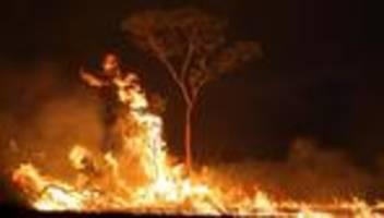 Brasilien: Waldbrände im Amazonas noch nicht unter Kontrolle
