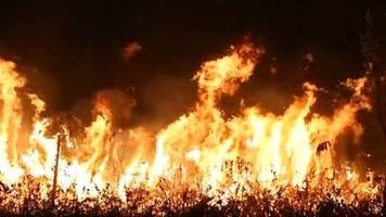Video: Heftige Waldbrände im Amazonasgebiet