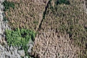 Forstwirtschaft: Soldaten bereiten Borkenkäfer-Einsatz mit Besichtigung vor