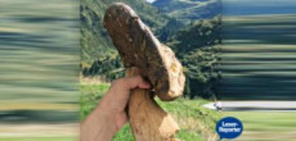 riesiger steinpilz : «so ein exemplar habe ich noch nie gesehen»