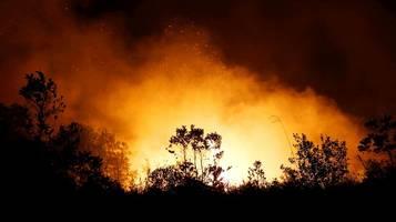 Indonesien: Waldbrände belasten gerettete Orang-Utans auf Borneo
