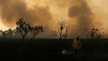 steigende gewalt gegen umweltschützer am amazonas