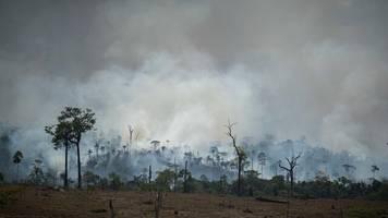 Brasilien: Über 200 Investoren fordern in öffentlichem Brief den Schutz des Amazonas