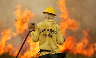 Investoren besorgt über Amazonasgebiet