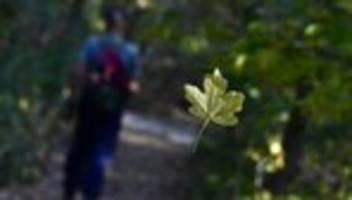 BGH-Urteil: Nachbarn müssen Laub und Pollen von Bäumen dulden