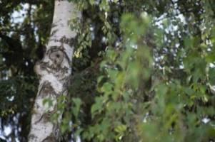 bgh-urteil: müssen nachbarn bäume an der grundstücksgrenze dulden?