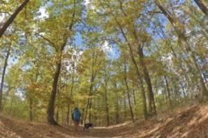 berlins kranke wälder: lange trockenheit: wenn eine buche plötzlich umfällt