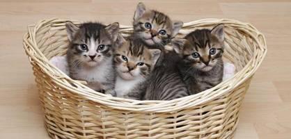 iran im besitz von bildern, auf denen joe biden katzen quält
