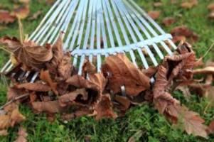 Richtige Pflege: Rasen im Herbst vor Unkraut und Moos schützen