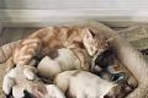 in südafrika - rührende mutterliebe: katzenmama nimmt verwaiste hundewelpen auf